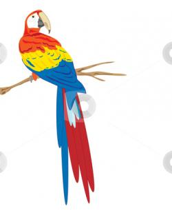Scarlet Macaw clipart