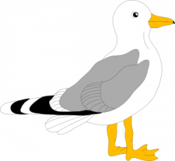 Sea Bird clipart