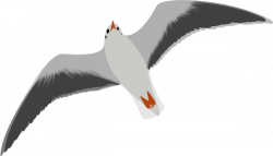 Seagull clipart transparent