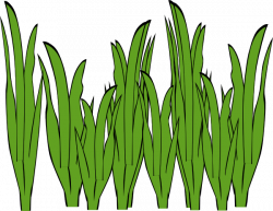 The Sea clipart sea grass
