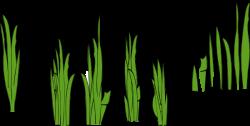 Lawn clipart seagrass