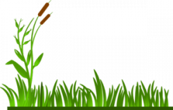 Lawn clipart swamp