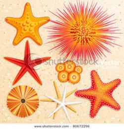 Sea Urchin clipart orange