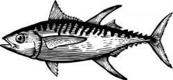 Tuna clipart black and white