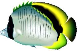 Coral Reef clipart saltwater fish