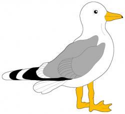 Seagull clipart