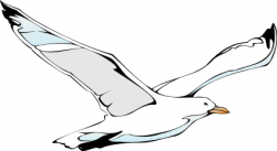 Albatross clipart seagul