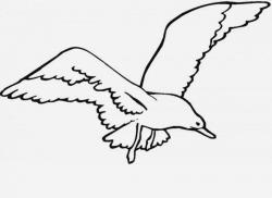 Seagull clipart black and white