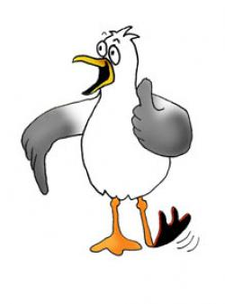 Seagull clipart cartoon