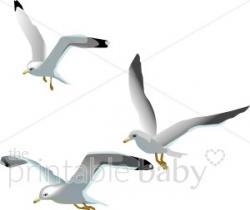 Sea Bird clipart seagull