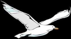 Drawn seagull clipart