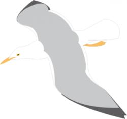 Seagull clipart vector