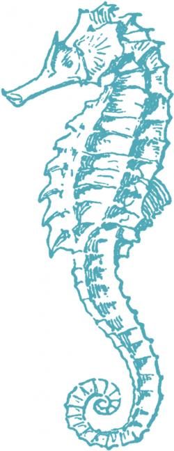 Wedding clipart seahorse