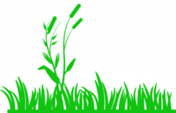Seaweed clipart pond reed