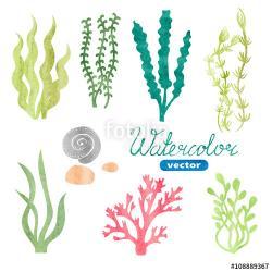 Algae clipart aquarium plant