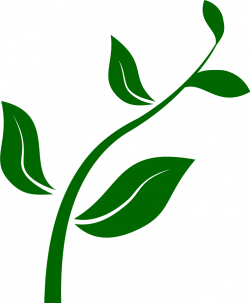 Stem clipart leaf