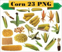 Seeds clipart corn seed