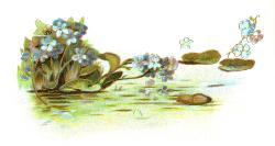 Serene clipart pond