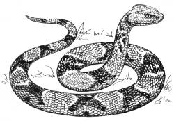 Viper clipart black and white