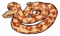Boa Constrictor clipart cartoon
