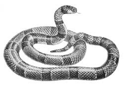 Serpent clipart public domain
