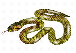 Serpent clipart snake in grass