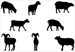 Shadows clipart sheep