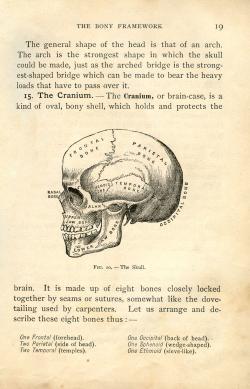 Anatomy clipart