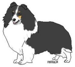 Sheepdog clipart shetland sheepdog