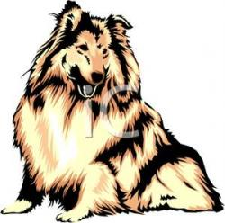 Rough Collie clipart cartoon