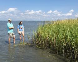 Shoreline clipart marsh grass