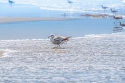 Shoreline clipart sea view