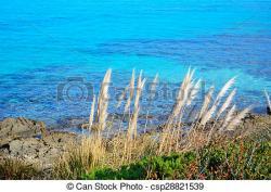 Shoreline clipart vegetation