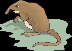 Otter clipart shrew
