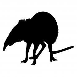 Shrew clipart mole