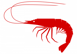 Seafood clipart shrimp food