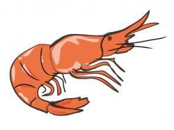 Seafood clipart shrimp