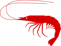 Crustacean clipart shrimp food