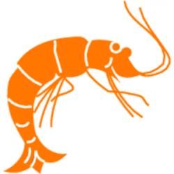 Crustacean clipart prawn