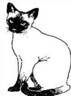 Cat clipart siamese