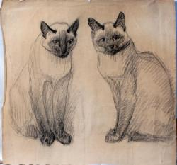 Siamese Cat clipart drawing