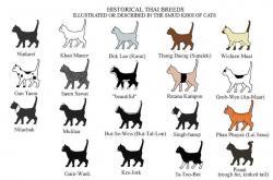 Siamese Cat clipart thai