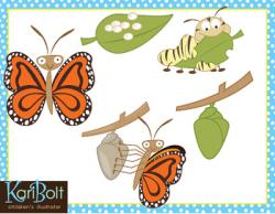 Caterpillar clipart butterfly life cycle