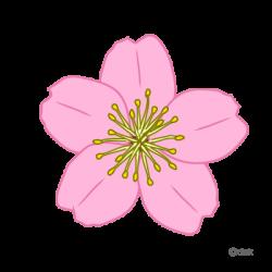 Cherry Tree clipart bloom