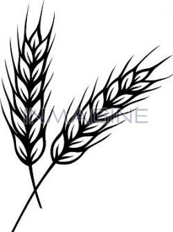Barley clipart corn stalk