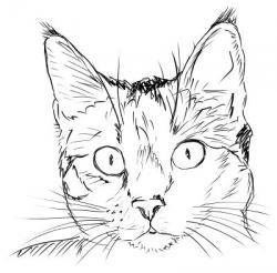 Drawn feline cat face