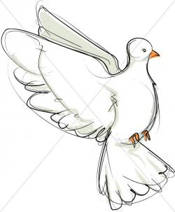 Dove clipart flight sketch