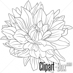 Dahlia clipart drawing