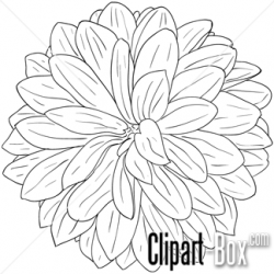 Dahlia clipart black and white