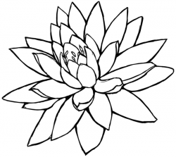 Sketch clipart lotus flower